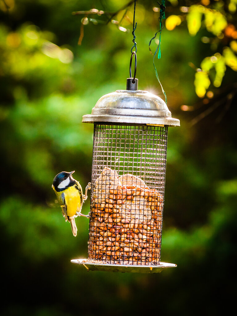 Fugls føde