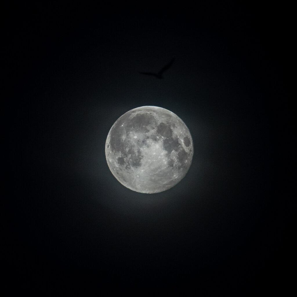 Fuglmåne